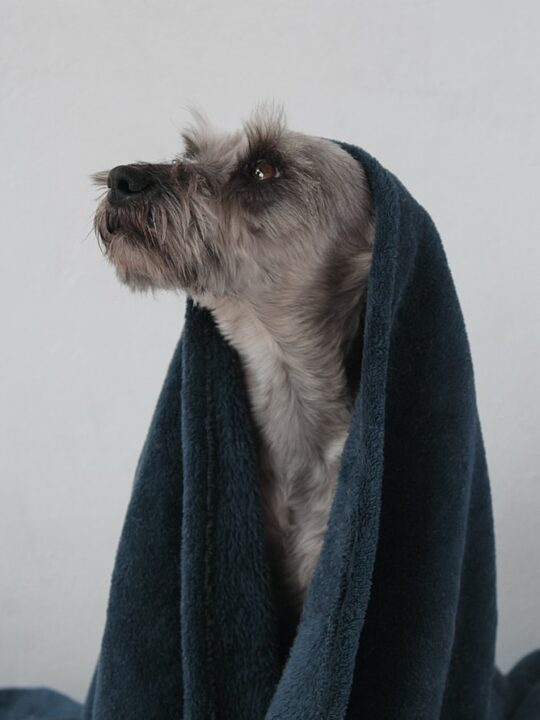 Best Oatmeal Shampoo for Dogs in 2021