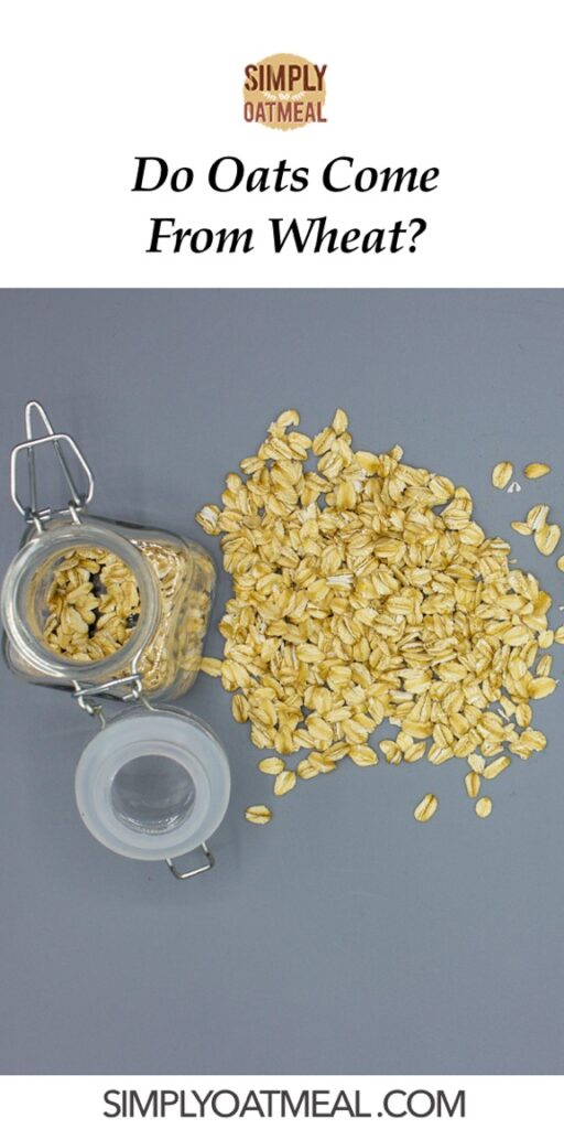 Do oats come from wheat?